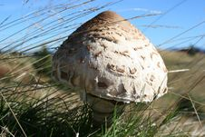 Free Mushroom Stock Photography - 18026532