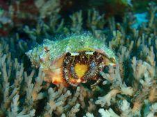 Free Hermit Crab Royalty Free Stock Photo - 18027105