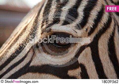 Free Close-up Of Zebra Eye Stock Photography - 18039562