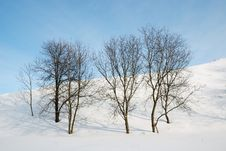 Free Bare Trees Against Snow Slope And Blue Sky. Royalty Free Stock Image - 18035236