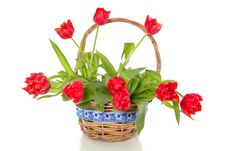 Free Cheerful Red Bouquet  Tulips Stock Images - 18035734