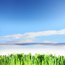Green Grass Under The Blue Sky Royalty Free Stock Photo