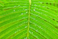 Free Water Droplets On Green Leaf Stock Photo - 18039560