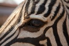 Free Close-up Of Zebra Eye Stock Photography - 18039562