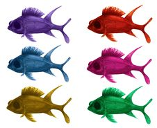 Squirrel Fish Royalty Free Stock Images