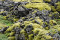 Free Moss On Basaltic Rocks Stock Photo - 18047850