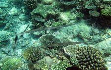 Free Underwater World Royalty Free Stock Photo - 18040195