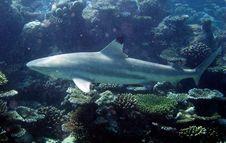 Free Underwater World Royalty Free Stock Photo - 18040295