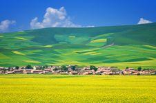 Free China Qinghai Rape Landscape Royalty Free Stock Image - 18044676