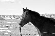 Free Foal Stock Image - 18045141