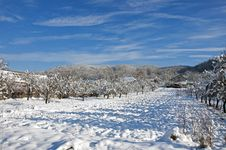 Free Orchard Shadows On Fresh Snow Royalty Free Stock Image - 18046736