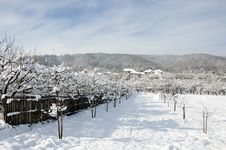 Snowy Village Hotel In Winter Orchard Stock Images