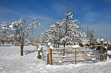 Free Wooden Gate To Snowy Orchard Stock Images - 18047094