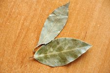 Free Bay Leaves Royalty Free Stock Photos - 18047148
