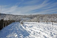 Free Plowed Snow On Winter Orchard Stock Photography - 18047172