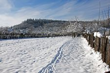 Free Trace On Snow Royalty Free Stock Photos - 18047198