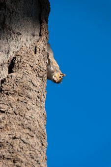 Free Squirrel Stock Photo - 18048100