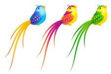 Free Beautiful Little Birds Royalty Free Stock Image - 18050846