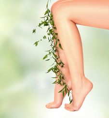 Free Herb And Legs Stock Photography - 18052172