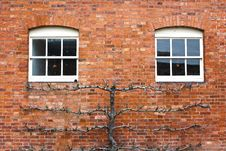 Free Windows Royalty Free Stock Images - 18052359