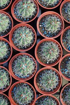 Free Cactus Stock Image - 18052971