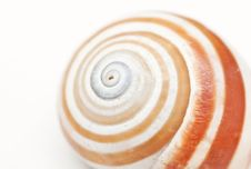 Free Beautiful Seashell Close-up On A White Background Stock Photography - 18053352