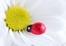 Free Ladybug On Flower Stock Image - 18053401