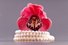 Free 3 Strand Freshwater Pearl Bracelet And Orchid Bud Stock Image - 18055881