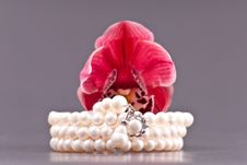 Free Pearl Bracelet Royalty Free Stock Photography - 18055887