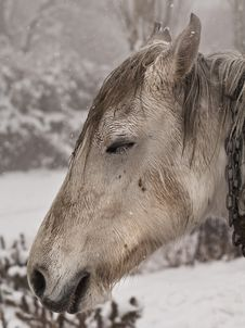 Free Horse In The Snow Stock Photography - 18056382
