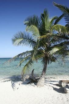Free Lone Palm Tree On Beach Royalty Free Stock Photos - 18057338
