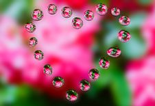 Free Water Drops With Reflection Stock Photography - 18059342