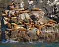 Free Sea Lions Sunning Themselves On Rocks Royalty Free Stock Images - 18060509