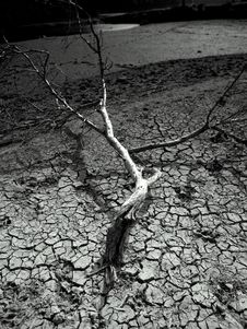 Free Dry Land And Tree BW Stock Photo - 18061630