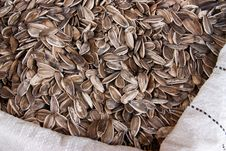 Free Sunflower Seeds Royalty Free Stock Photography - 18061707