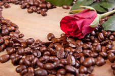Free Coffee And Rose Royalty Free Stock Images - 18069909