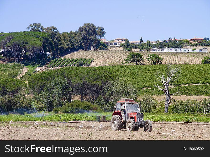 Tractor farming crop fields