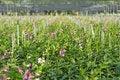 Free Orchid Farm Stock Photos - 18071373