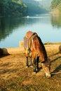Free Feeding A Horse Royalty Free Stock Photos - 18074688