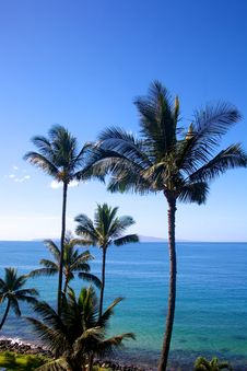 Free Large Palm Trees Stock Photos - 18070123