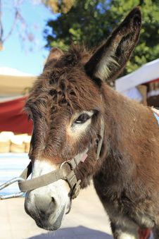 Free Male Donkey Stock Photo - 18071640