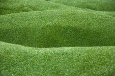 Free Artificial Grass Royalty Free Stock Image - 18071766