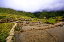 Free Rice Terraces Royalty Free Stock Photo - 18074685