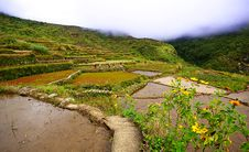 Free Rice Terraces Stock Photo - 18074700