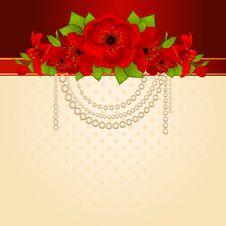 Beautiful Red Poppy Stock Photos
