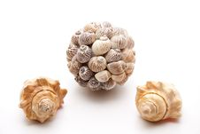 Free Ball With Sea Shells Stock Image - 18075551