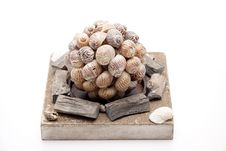 Free Sea Shells Stock Photography - 18075592