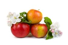 Free Ripe Red Apples And Apple-tree Blossoms Royalty Free Stock Photos - 18076238