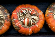 Free Orange Pumpkins Stock Image - 18076391