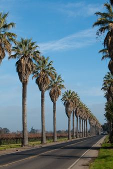 Free Row Of Palm Trees Along Side A Road Royalty Free Stock Photo - 18077735